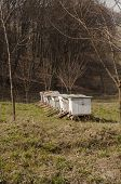 foto of bee keeping  - Near forest bee hives in Transylvanian rural site - JPG