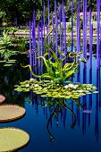 stock photo of lillies  - Glass sculpture in blue lake with lilly pads - JPG
