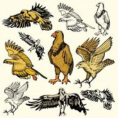 A set of 5 vector illustrations of birds.