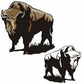 Illustration of a bison.