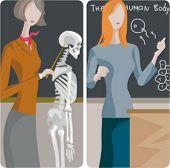 Teacher illustrations series. 1) Biology teacher examining a skeleton. 2) Biology teacher teaching a propagation lesson in a classroom.