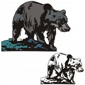 picture of grizzly bears  - Vector illustration of a bear - JPG