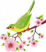 picture of cherry blossom  - Cute bird sitting on blossom tree branch - JPG