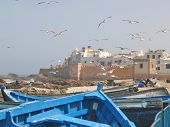 Sea Gull Over The Harbour And The City Rampart With A Blue Boat On The Foreground, Essaouira, Morocc