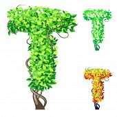 Vector illustration of an extra detailed tree alphabet symbols. Easy detachable crown. character t