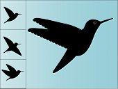 hummingbird silhouettes
