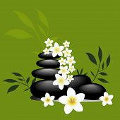 frangipani flowers and spa rocks