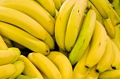 picture of bunch bananas  - Bananas - JPG