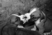 Filhotes de beijar