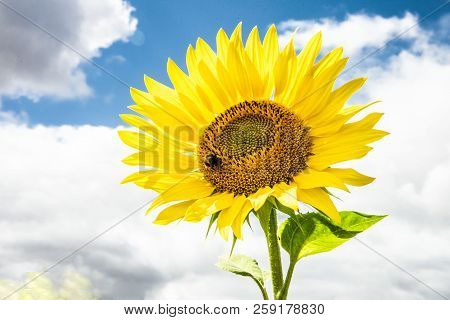 poster of Single,sunny Flower Macro Photo And Cloudy Sky.