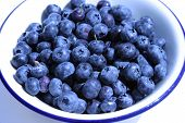 fresh blueberries (V. corymbosum) in a white bowl on white