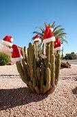 Saguaro Cactus wear
