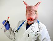 A Doctor in a Pig Mask holds a large cooking thermometer representing the Mexican Swine Flu Pandemic