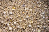 Top View Of Many Small Shells. Pebble Beach With Shells Background. poster