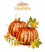 Pumpkin Watercolor Autumn Background Vector. Fall Season Painted Style Illustrations poster