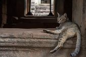 Brown Cat Resting In Ancient Temple, Angkor Wat, Cambodia. Lazy Cat Resting On Historical Building.  poster