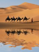 stock photo of barchan  - Camel caravan going through the sand dunes in the Sahara Desert - JPG