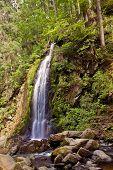 Cachoeira na floresta com uma longa exposição