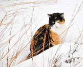 Beautiful calico cat in snow on a cold gray winter day