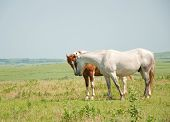 Two horses sniffing noses in a prairie pasture on a hazy summer day
