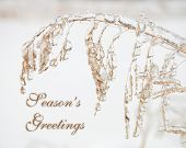 Wild oats covered in a thick layer of ice with text Seasons Greetings in subtle color