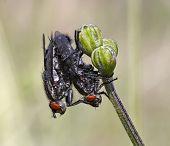 Coupling Flies