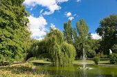 picture of weeping willow tree  - Bank of a pond and beneath weeping willows  in Danube park - JPG