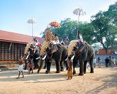 COCHIN, INDIA - FEBRUARY 03 :Parade with gold caparisoned elephants at the annual festival in Siva T