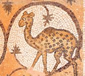 Petra church or Byzantine Church and its exquisite Byzantine floor mosaics, some of the best in the