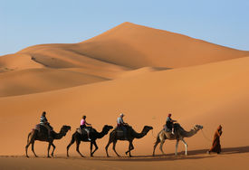 picture of barchan  - Camel caravan going through the sand dunes in the Sahara Desert - JPG