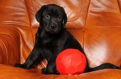 Cute Little Puppy With Red Ball