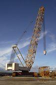 Great crane