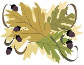 stock photo of fall leaves  - Oak Leaves with Acorns is original artwork - JPG