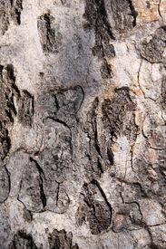 foto of bosveld  - Picture Rough Grooved Bushveld Tree Trunk Background - JPG
