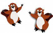 2 Beavers