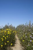 stock photo of lagos  - Footpath leading through wild flowers at the Ria Formosa Nature Reserve Quinta do Lago Algarve Portugal - JPG