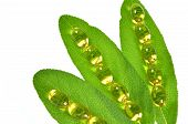 fish oil capsules on sage leaves