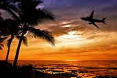 Sunset with palm tree and airplane silhouettes