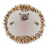 Hedgehog in the circle
