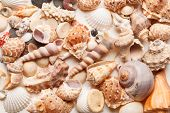 sea shells background