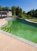 pic of green algae  - Back yard swimming pool behind modern single family home at pool opening with green stagnant algae filled water before cleaning - JPG