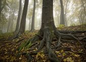 Tree with big roots in a colorful forest with fog