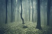 Strange fog in a forest with trees