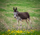 pic of wild donkey  - Donkey on a meadow - JPG