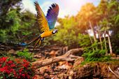 Beautiful Ara parrot on tropical forest background