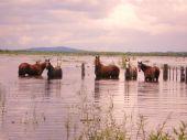 Caballos en agua