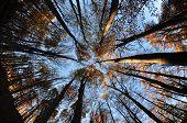 kreisförmige Wald