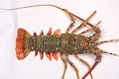 Fresh raw lobster tail.