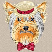 Vektor lustige Cartoon Hipster Hund Yorkshire terrier