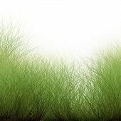 Wild Grass Organic Background